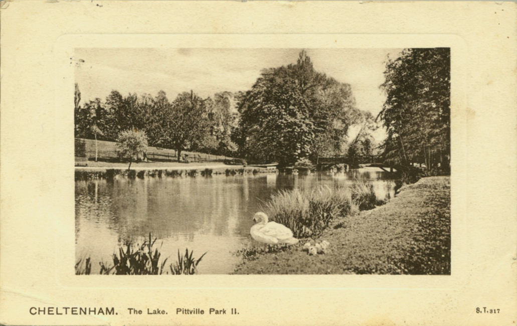 Swan, cygnets, and a peaceful lake (1930s)